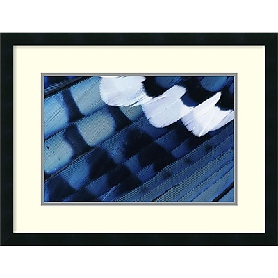 Rolf Nussbaumer 'Blue Jay Feathers, Texas' Framed Art Print 26