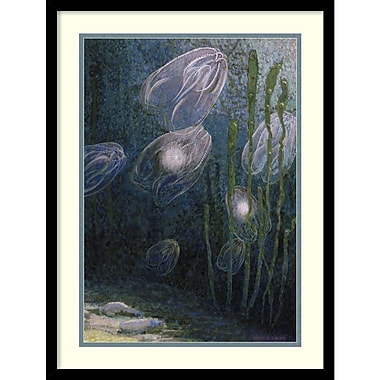 Amanti Art William H. Crowder Rainbow-Jellies, Mnemiopsis Leidyi, Floating In Water, 19