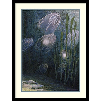 William H. Crowder 'Rainbow-jellies, Mnemiopsis leidyi, floating in water, 1926' Framed Art Print 19