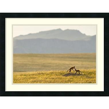 Amanti Art ? Impression encadrée « Renardeaux au Montana » par Jason Savage, 26 x 20 po (DSW2972166)