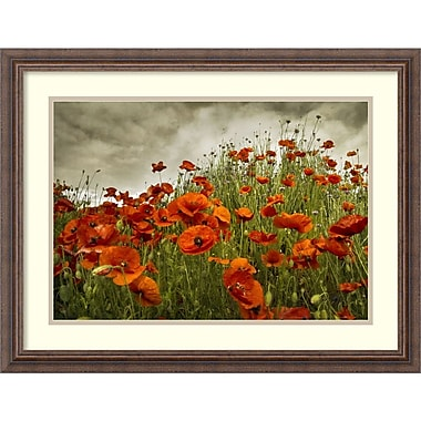 Amanti Art David Lorenz Winston Bobbis Poppies Framed Art Print, 27
