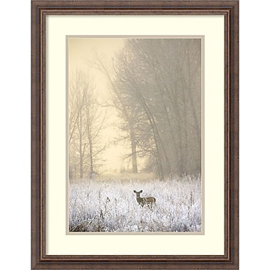Amanti Art Jason Savage White-tailed Deer in Fog Framed Art Print, 21