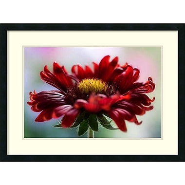 Amanti Art ? Impression encadrée « Flame » par Mandy Disher, 32 x 24 po (DSW2971913)