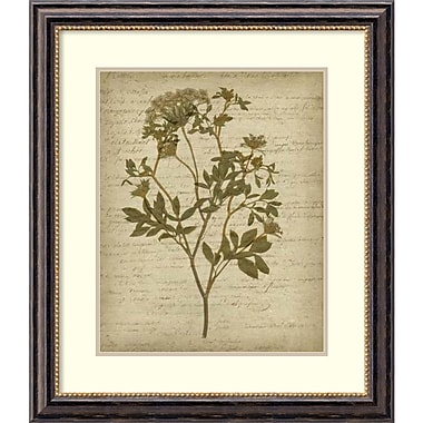 Amanti Art ? Impression encadrée « Fleurs pressées romantiques IV » par Jennifer Goldberger, 26 x 30 po (DSW1421316)