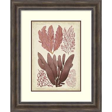 Vision Studio 'Seaweed Specimen in Coral IV' Framed Art Print 27