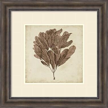Amanti Art ? Impression encadrée « Vintage Seaweed III » par Georg C. Oeder, 30 x 30 po (DSW1421169)