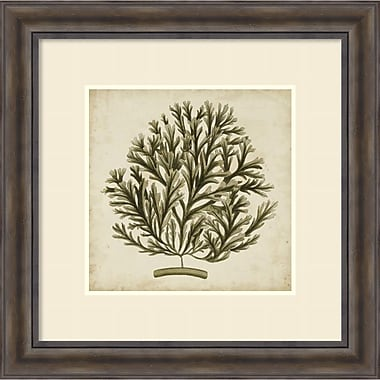 Amanti Art ? Impression encadrée « Vintage Seaweed I » par Georg C. Oeder, 30 x 30 po (DSW1421170)
