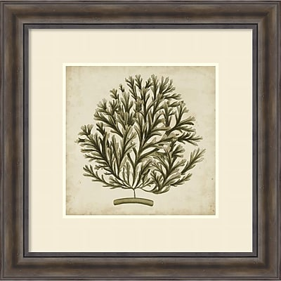 Georg C. Oeder 'Vintage Seaweed I' Framed Art Print 30