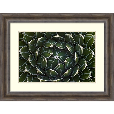 Amanti Art Ingo Arndt Queen Victorias Agave, Saguaro National Park, Arizona Framed Art Print, 36