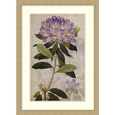 Amanti Art John Butler Rhododendron II Framed Art Print, 30