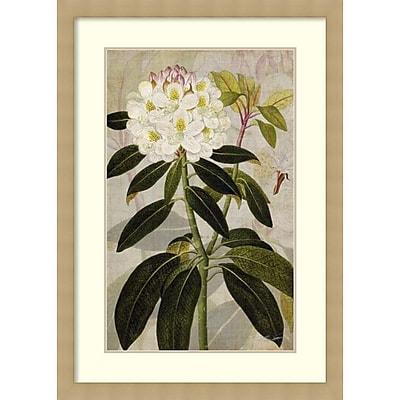 John Butler 'Rhododendron I' Framed Art Print 30