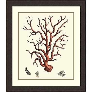 Amanti Art Vision Studio Red Coral I Framed Art Print, 35
