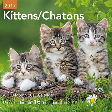 Daydream® – Mini calendrier décoratif de 16 mois 2017, Chatons, bilingue