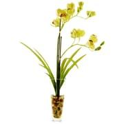 LCGFlorals Cymbidium Orchids in Glass Vase