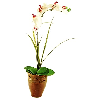 LCGFlorals Phalaenopsis Orchid and Grass in Ceramic Pot; White