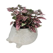 Coynes Nature's Garden Novelty Hedgehog Pot Planter