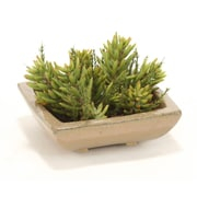 Distinctive Designs Succulent Garden Desk Top Plant in Planter