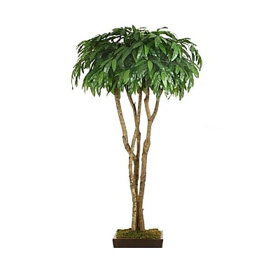 Distinctive Designs Mango Canopy Tree in Pot