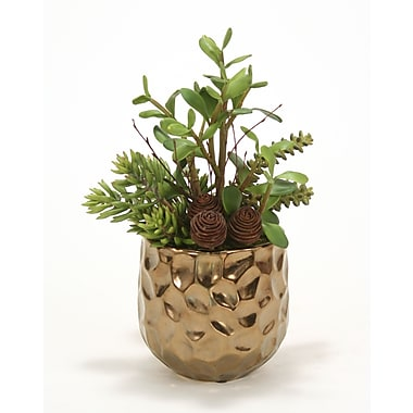 Distinctive Designs Jade, Succulents and Cactus Desk Top Plant in Planter