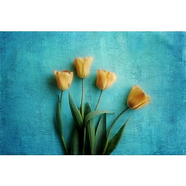 Marmont Hill 'Yellow Tulips' by Sylvia Cook Painting Print on Wrapped Canvas; 16 H x 24 W x 1.5 D
