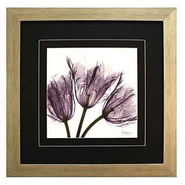Pictures and Mirrors 'X-Ray Purple Parrot Tulip Trio' by Albert Koetsier Framed Painting Print