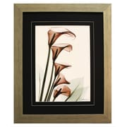 Pictures and Mirrors 'X-Ray Calla Lilly in Pink' by Albert Koetsier Framed Painting Print