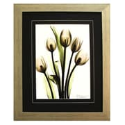 Pictures and Mirrors 'X-Ray Bunch of Pink Tulips' by Albert Koetsier Framed Painting Print