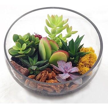 Envelor Home Glass Terrarium