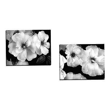 Portfolio Canvas Composition 1 by Adriana 2 Piece Photographic Print on Wrapped Canvas Set