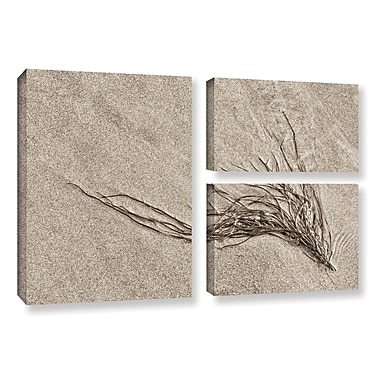 ArtWall 'Beach Find I' by Cora Niele 3 Piece Graphic Art on Wrapped Canvas Set