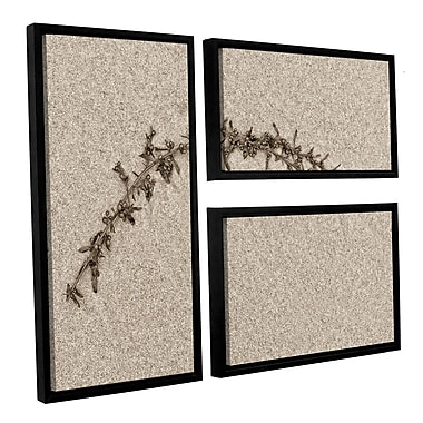 ArtWall 'Beach Find II' by Cora Niele 3 Piece Framed Graphic Art on Wrapped Canvas Set
