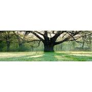3 Panel Photo Oak Tree Photographic Print on Wrapped Canvas