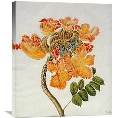Global Gallery African Tulip Painting Print on Wrapped Canvas; 30'' H x 25.42'' W x 1.5'' D