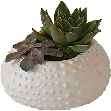 Global Views Ceramic Urchin Decorative Bowl; 3'' H x 7.75'' W