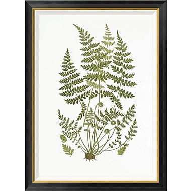 Global Gallery 'Brittle Fern' by Anonymous Framed Wall Art; 42'' H x 31.2'' W x 1.5'' D
