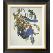Global Gallery 'Florida Jay' by John James Audubon Framed Wall Art; 22'' H x 19.28'' W x 1.5'' D
