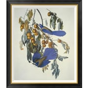 Global Gallery 'Florida Jay' by John James Audubon Framed Wall Art; 36'' H x 30.9'' W x 1.5'' D