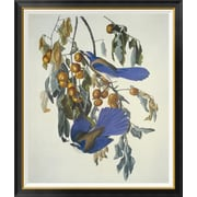 Global Gallery 'Florida Jay' by John James Audubon Framed Wall Art; 46'' H x 39.2'' W x 1.5'' D