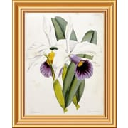 Global Gallery 'Lily' by William Curtis Framed Graphic Art; 20 inch H x 16.3 inch W x 1.5 inch D by