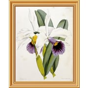 Global Gallery 'Lily' by William Curtis Framed Graphic Art; 26 inch H x 20.91 inch W x 1.5 inch D by