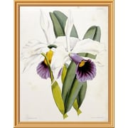 Global Gallery 'Lily' by William Curtis Framed Graphic Art; 40 inch H x 31.68 inch W x 1.5 inch D by