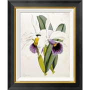 Global Gallery 'Lily' by William Curtis Framed Graphic Art; 22 inch H x 18.3 inch W x 1.5 inch D by