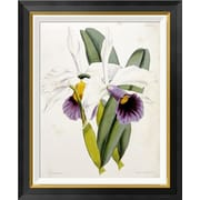 Global Gallery 'Lily' by William Curtis Framed Graphic Art; 28 inch H x 22.91 inch W x 1.5 inch D by