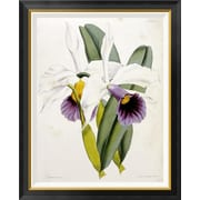 Global Gallery 'Lily' by William Curtis Framed Graphic Art; 36 inch H x 29.06 inch W x 1.5 inch D by