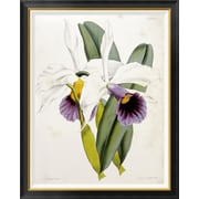 Global Gallery 'Lily' by William Curtis Framed Graphic Art; 42 inch H x 33.68 inch W x 1.5 inch D by