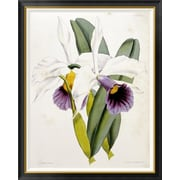 Global Gallery 'Lily' by William Curtis Framed Graphic Art; 46 inch H x 36.75 inch W x 1.5 inch D by