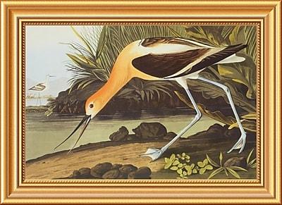 Global Gallery 'American Avocet' by John James Audubon Framed Graphic Art; 16'' H x 22'' W x 1.5'' D