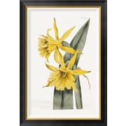 Global Gallery 'Narcissi' by William Curtis Framed Graphic Art; 36 inch H x 25 inch W x 1.5 inch D by