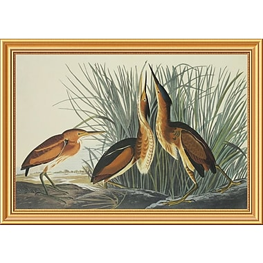 Global Gallery 'Least Bittern' by John James Audubon Framed Wall Art; 24'' H x 34'' W x 1.5'' D