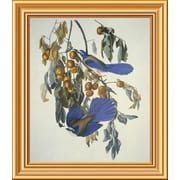 Global Gallery 'Florida Jay' by John James Audubon Framed Wall Art; 20'' H x 17.28'' W x 1.5'' D